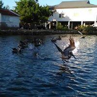 ronen salton's picture