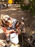 Amazing kangaroo experience!  - review image 1